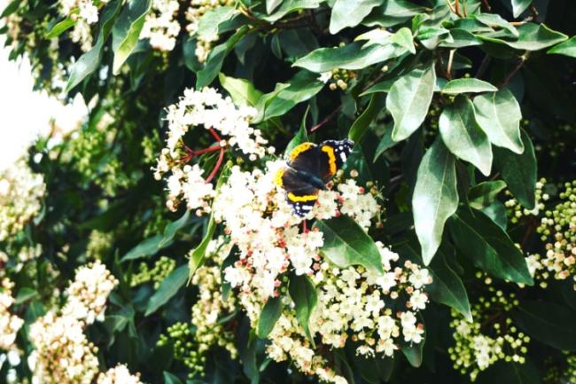 Lisabonos gamta, pavasaris ir drugelis