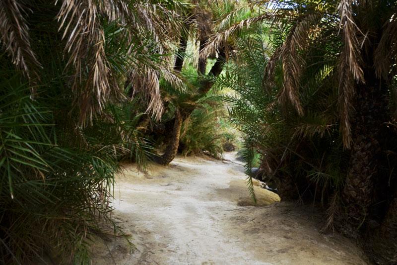 Palmių parkas, palmių džiunglės Graikijoje