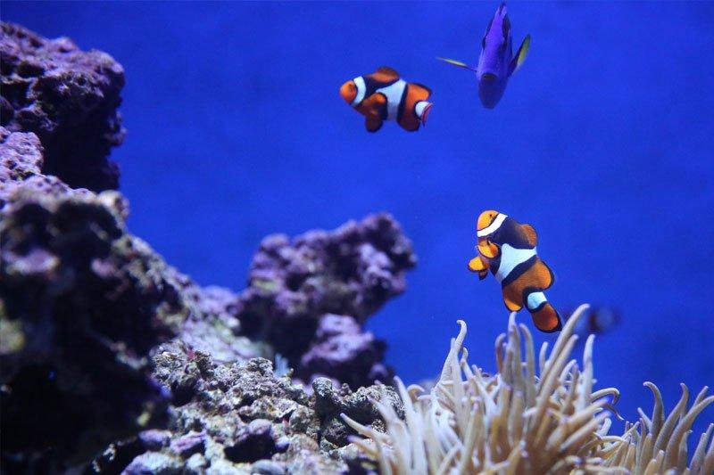 Koralai ir žuvys