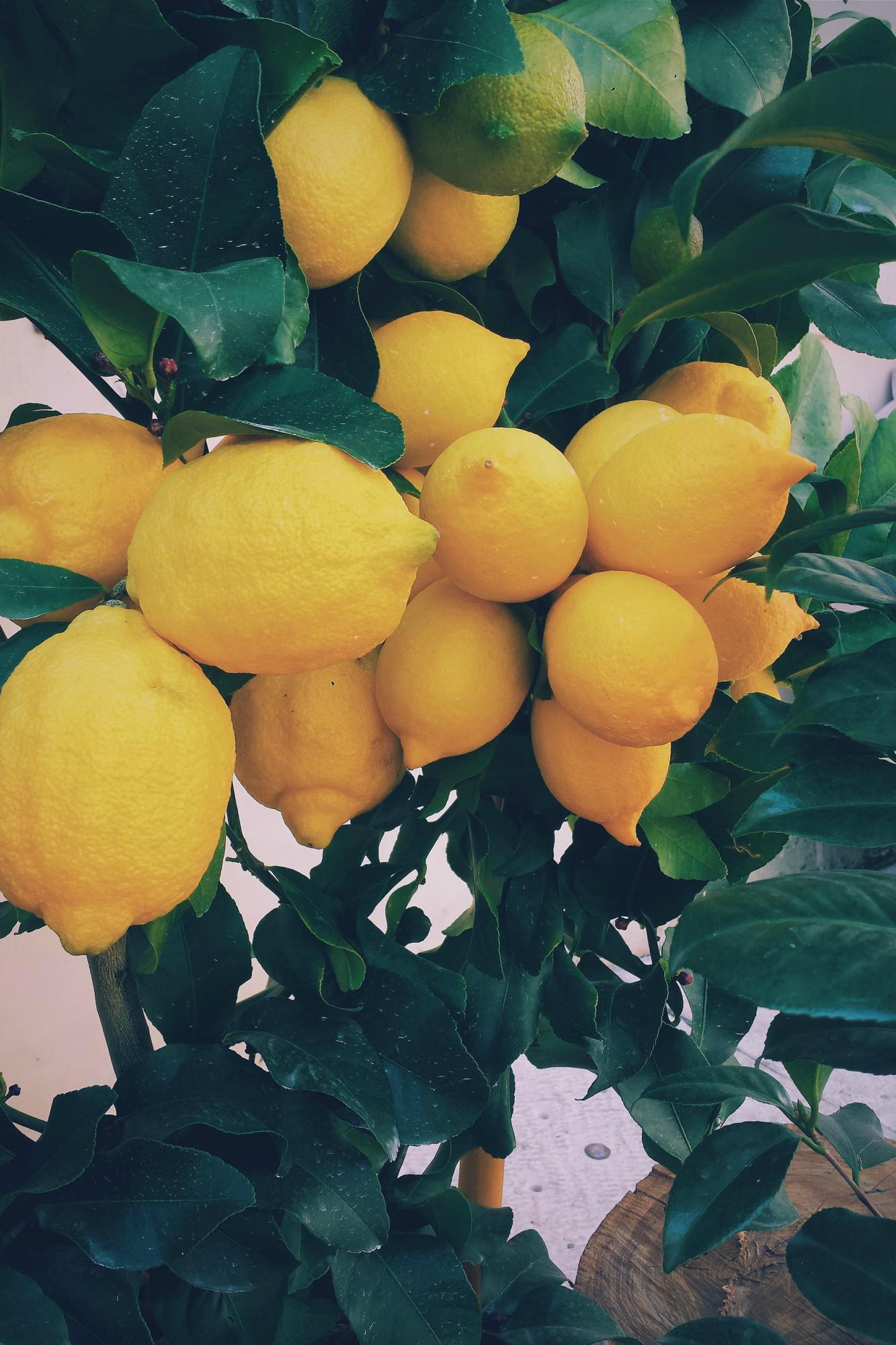citrinmedis
