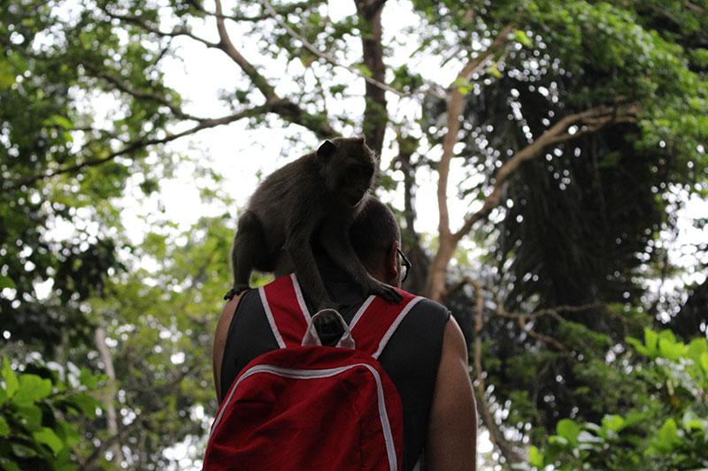 Beždžionių miške Balyje