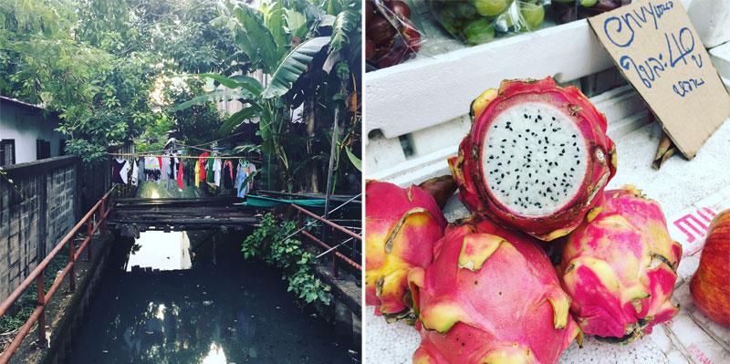 Skalbiniai virš upės, Tailandas, tropinė gamta, drakono vaisiai