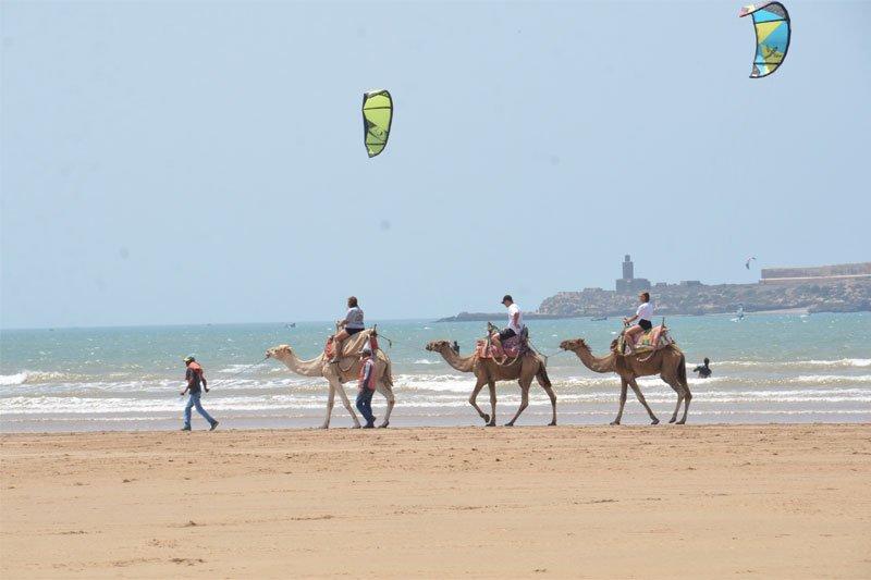 Jojimas kupranugariais, Marokas