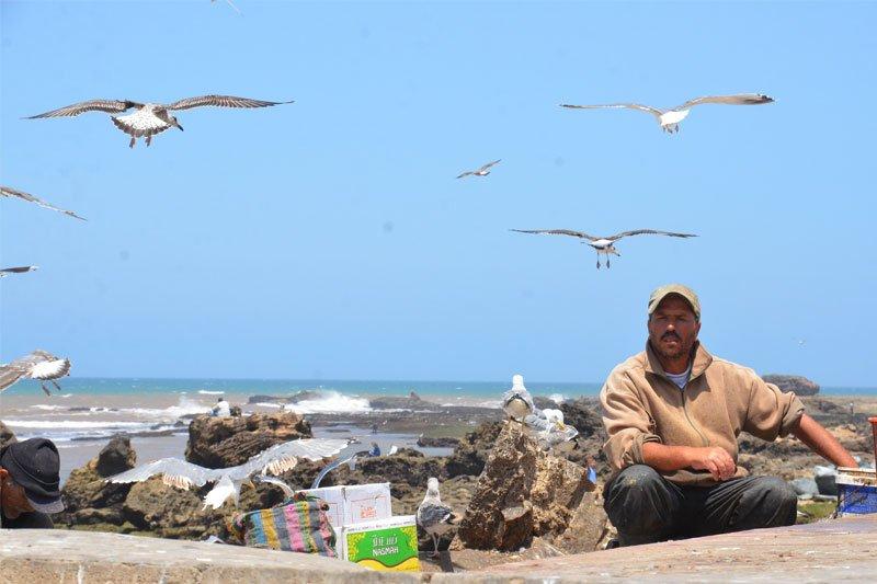 Žvejys, Marokas