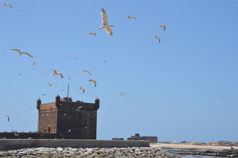 Essaouira, Markas, uostas, fortas, paukščiai