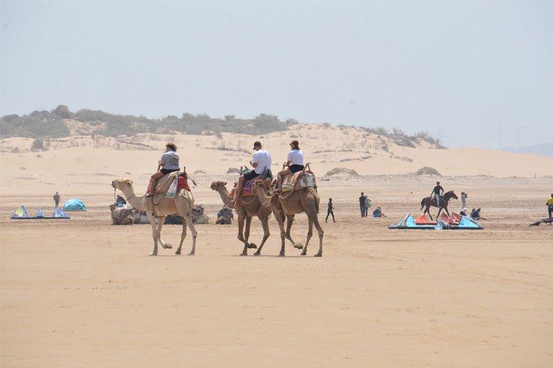 Žmonės jojantys ant kupranugarių, Marokas