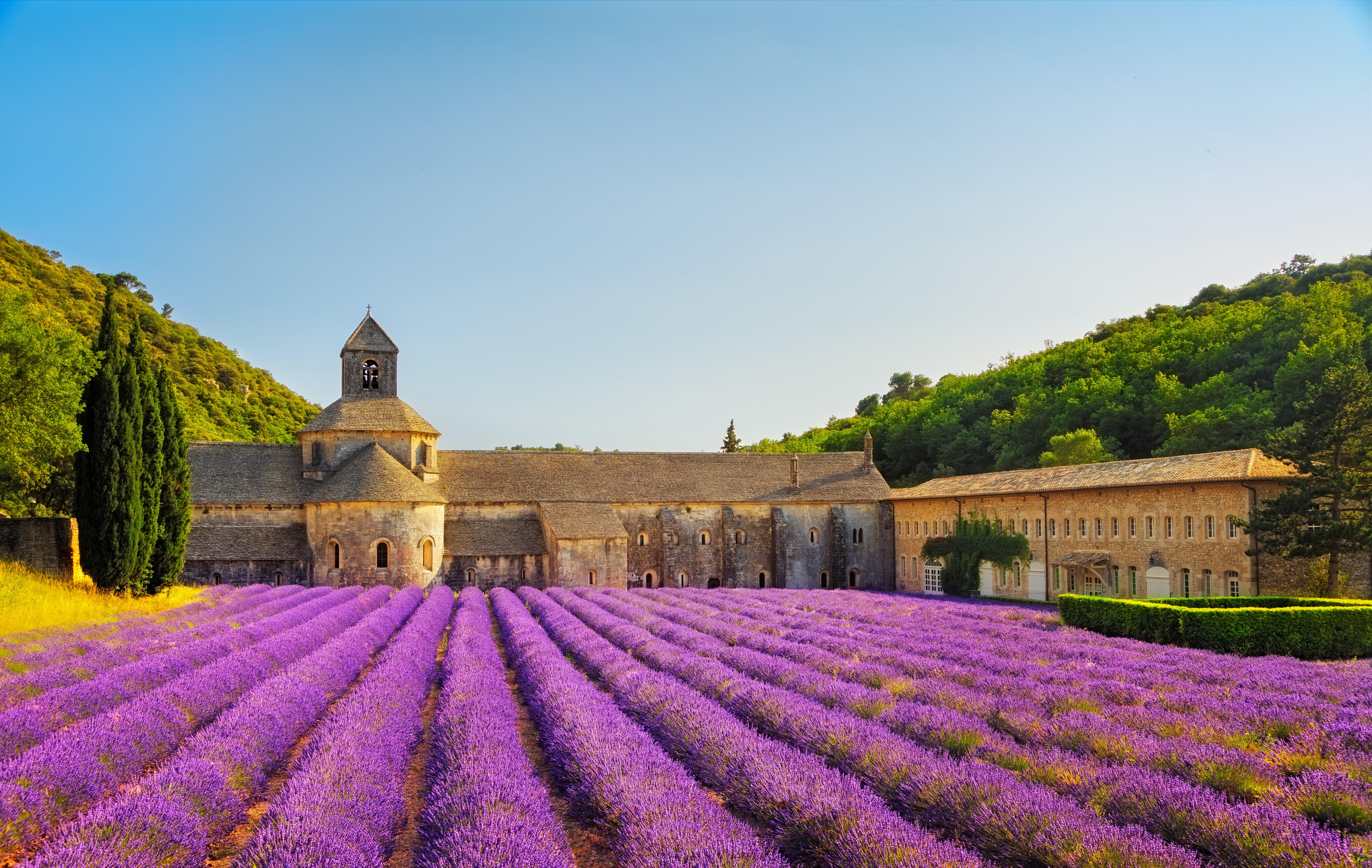 Levandų laukai, Prancūzija