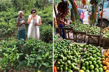 Aleksandra arbatos plantacija, arbatos rinkėja, Šri Lanka, vaisių turgus