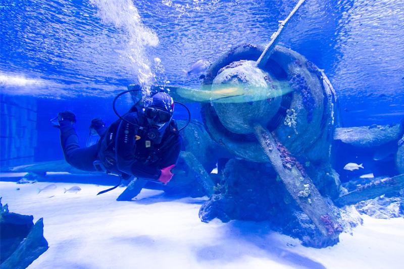 Nardymas akvariume Antalija, Turkija