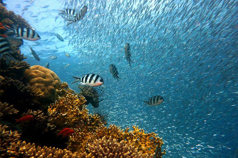 Nardymas, koralai